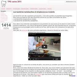 Les bactéries lactobacillus et streptococcus mutants - TPE caries 2011