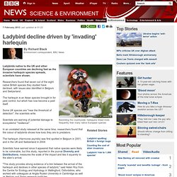 Ladybird decline driven by 'invading' harlequin