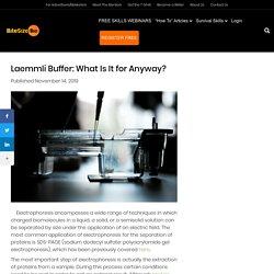 Laemmli Buffer: What Is It for Anyway? - Bitesize Bio