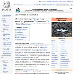 WIKIPEDIA - Lagocephalus sceleratus.