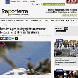 26 jan. 2021 Dans les Alpes, les lagopèdes reprennent l'espace laissé libre par les skieurs