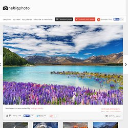 lake tekapo in new zealand photo