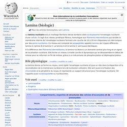 Lamina (biologie)