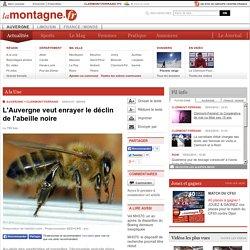 LA MONTAGNE 05/03/15 L'Auvergne veut enrayer le déclin de l'abeille noire
