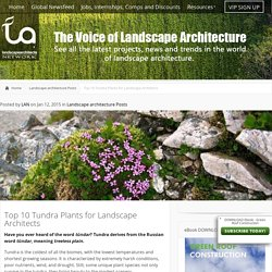 Top 10 Tundra Plants for Landscape Architects · Landscape Architects Network