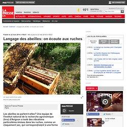 Langage des abeilles: on écoute aux ruches