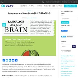 Language and Your Brain [INFOGRAPHIC] - Voxy