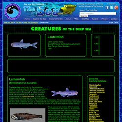 Lanternfish - Deep Sea Creatures on Sea and Sky