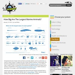 How Big Are The Largest Marine Animals?