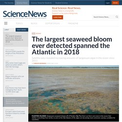 The largest seaweed bloom ever detected spanned the Atlantic in 2018