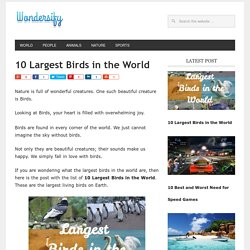 10 Largest Birds in the World [Largest Living Birds] - Wondersify