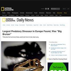 """Largest Known Predatory Dinosaur in Europe Found, Was """"Big Bruiser"""""""