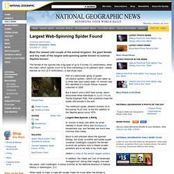 Largest Web-Spinning Spider Found