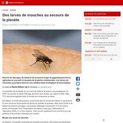 Des larves de mouches au secours de la planète
