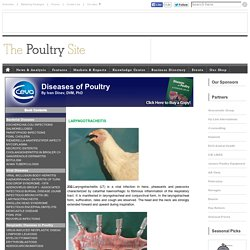 LARYNGOTRACHEITIS - Diseases of Poultry