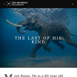 The Last of His Kind - Jody MacDonald Photography