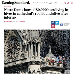 notre-dame-latest-180000-bees-living-in-hives-in-cathedrals-roof-found-alive-after-inferno-a4122321