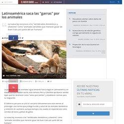 """Latinoamérica saca las """"garras"""" por los animales"""