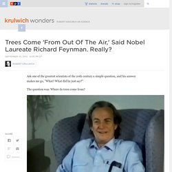 Trees Come 'From Out Of The Air,' Said Nobel Laureate Richard Feynman. Really? : Krulwich Wonders...