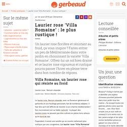 Laurier rose Villa Romaine, une variété résistante au froid