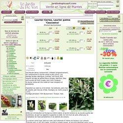 Laurier-Cerise, Prunus laurocerasus 'Caucasica'