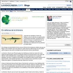 En defensa de la tintorera - EcoGallego - Blogs de Opinión de LaVanguardia.comEcoGallego – Blogs de Opinión de LaVanguardia.com