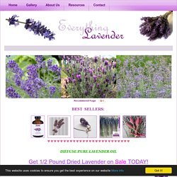 DRIED LAVENDER FLOWERS - Information on Drying, Using and Buying