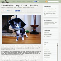 Law of survival – Why Cat's Don't Cry in Pain