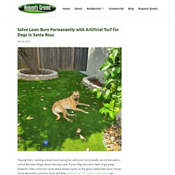 Fix Lawn Burn with Artificial Turf for Dogs in Santa Rosa