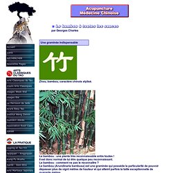 Le bambou à toutes les sauces