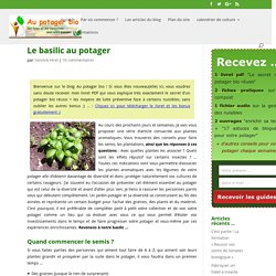 Le basilic au potager
