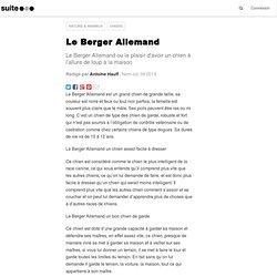 Le Berger Allemand: Le Berger Allemand , un chien qui a bien des qualités