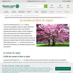 Le cerisier en fleur du Japon