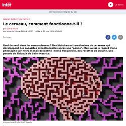 Le cerveau, comment fonctionne-t-il ?