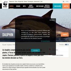 Le dauphin, en péril