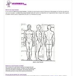 Le dessin du corps humain