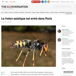 Le frelon asiatique est entré dans Paris