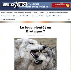 Le loup bientôt en Bretagne ?