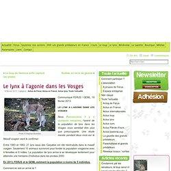 Le lynx à l'agonie dans les Vosges