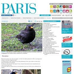 Le merle noir - Paris.fr-Mozilla Firefox
