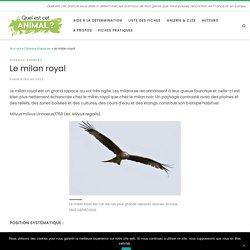 Le milan royal - Oiseaux Rapaces