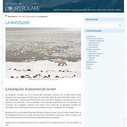 Le monde de l'ours polaire » La banquise