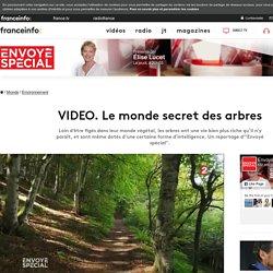 VIDEO. Le monde secret des arbres