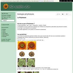 Le Nombre d'Or - biologie-phyllotaxie