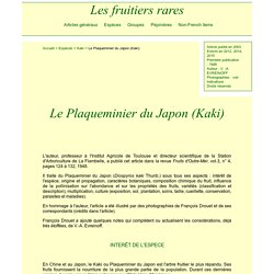 le Plaqueminier du Japon ou Kaki