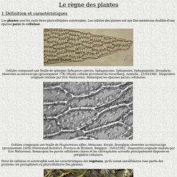 Le règne des plantes
