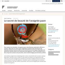 Le secret de beauté de l'araignée paon