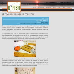Le temps des gambes à corégone » D Fish