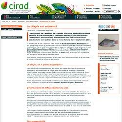 CIRAD 29/09/14 Le tilapia est séquencé