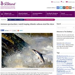 Find out where to watch leaping salmon in Scotland this autumn